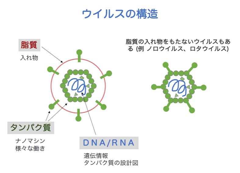 ウイルスの構造
