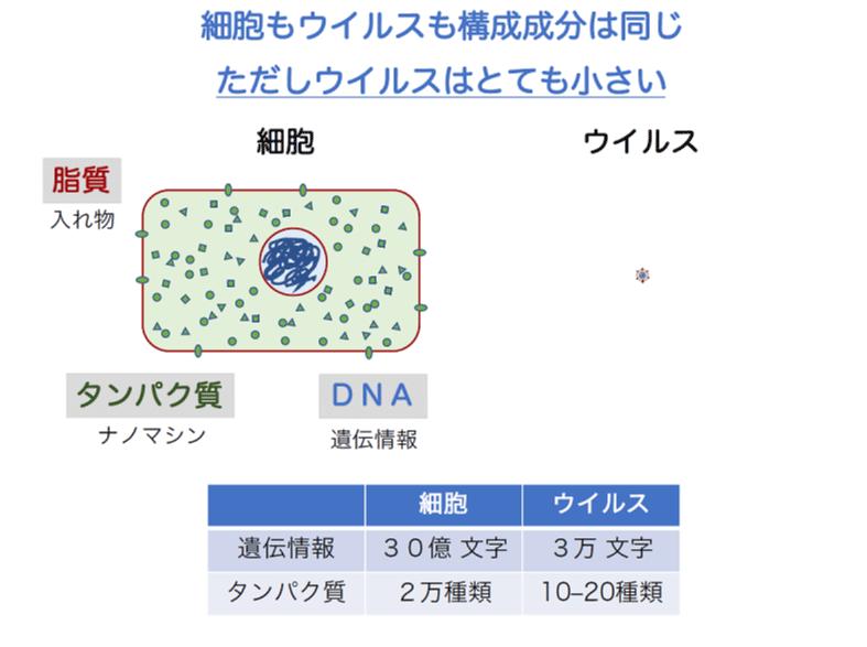 細胞もウイルスも構成成分は同じ。ただしウイルスはとても小さい