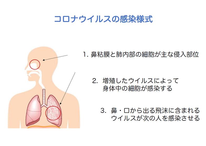 コロナウイルスの感染様式