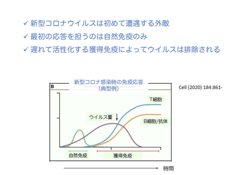 新型コロナ感染時の免疫応答(典型例)