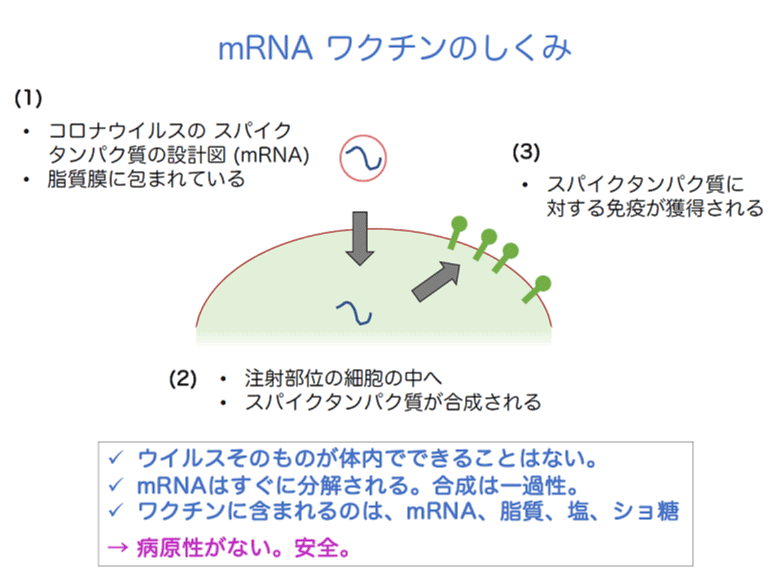 mRNA ワクチンのしくみ